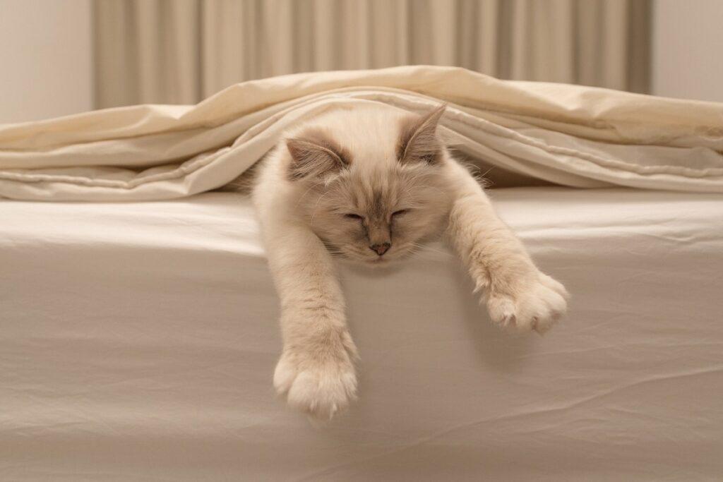 gatto dorme in modo buffo