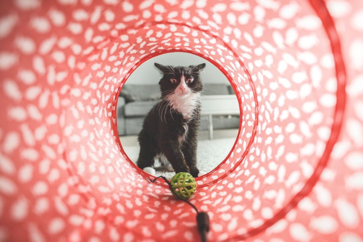gatto curioso