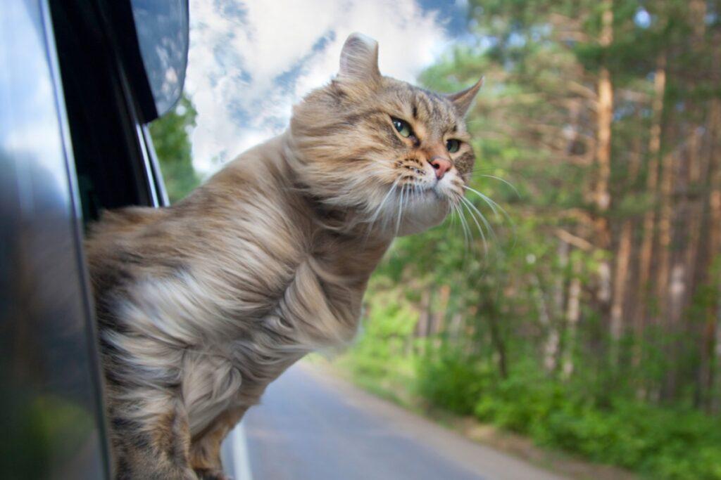 gatto fuori dal finestrino