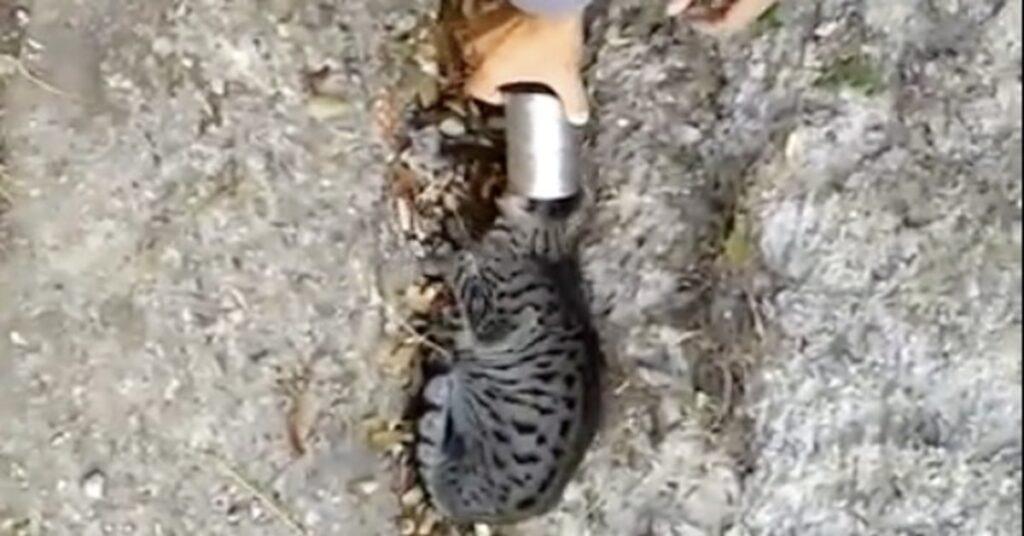 Un uomo libera un gatto intrappolato