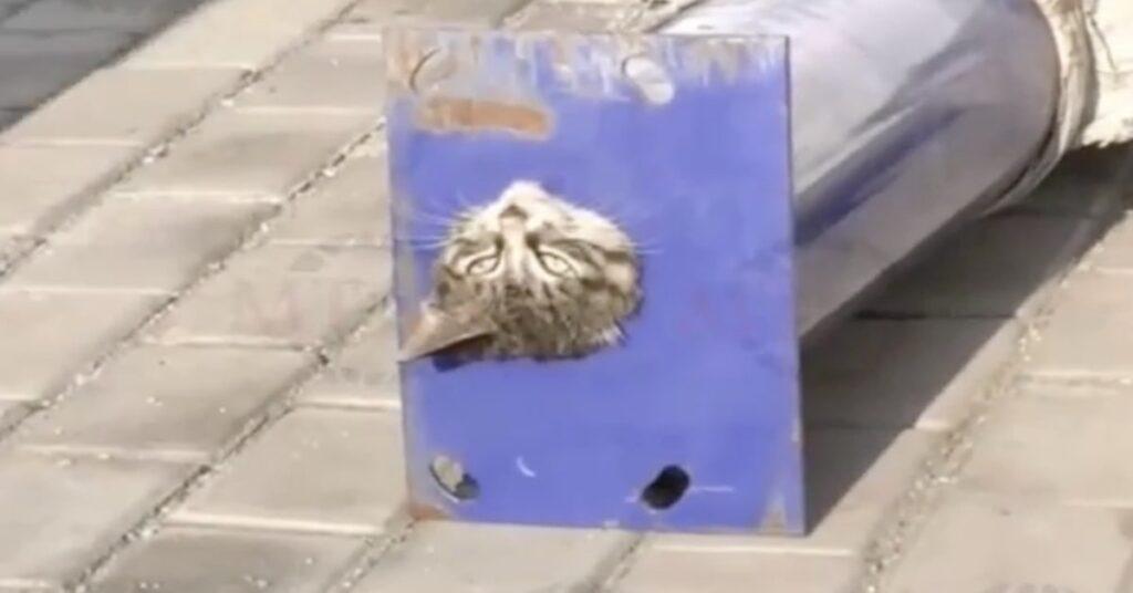 gatto incastrato in una tuberia