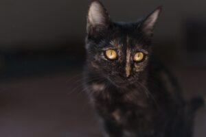 gattino nero al buio