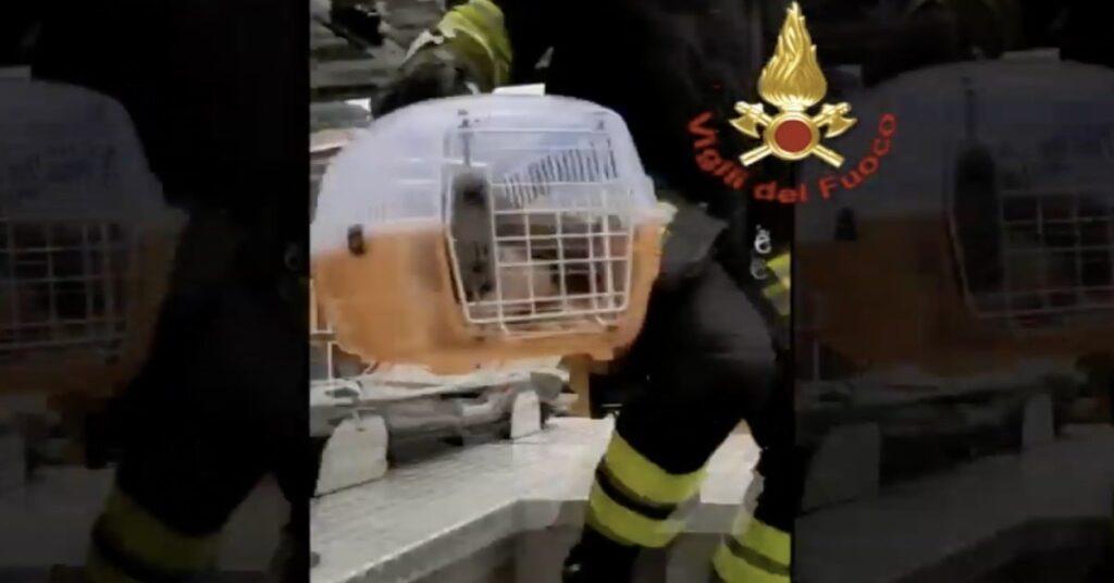 gatto dentro un trasportino