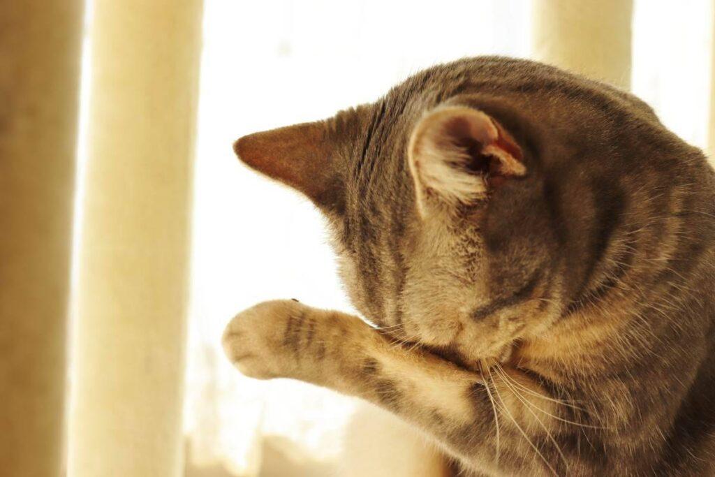 gattino che si copre gli occhi