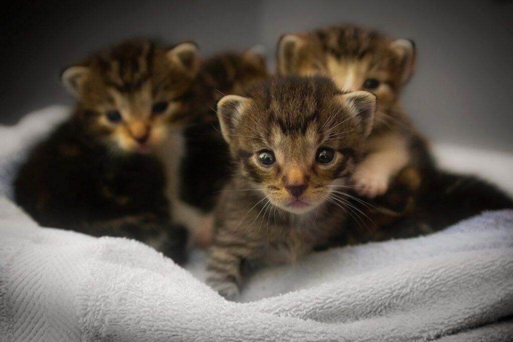 gattini nati da poco
