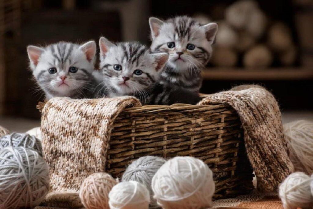 gattini fra i gomitoli di lana