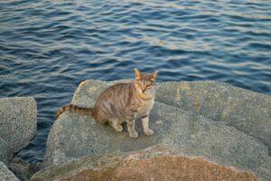 un gattino sugli scogli