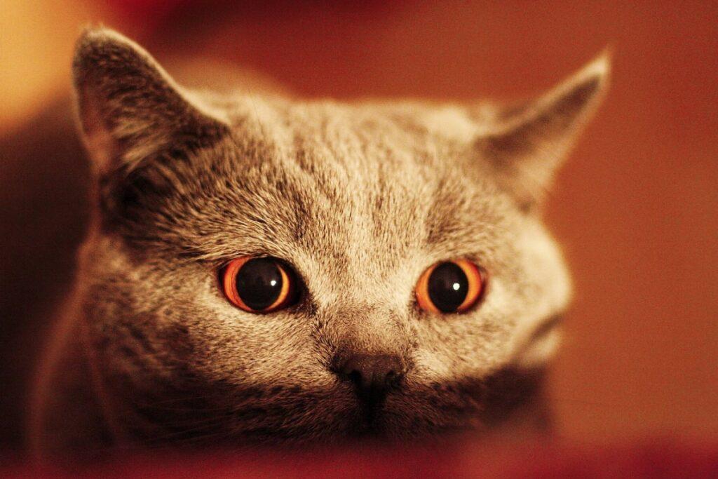 gatto che è in posizione di sfida