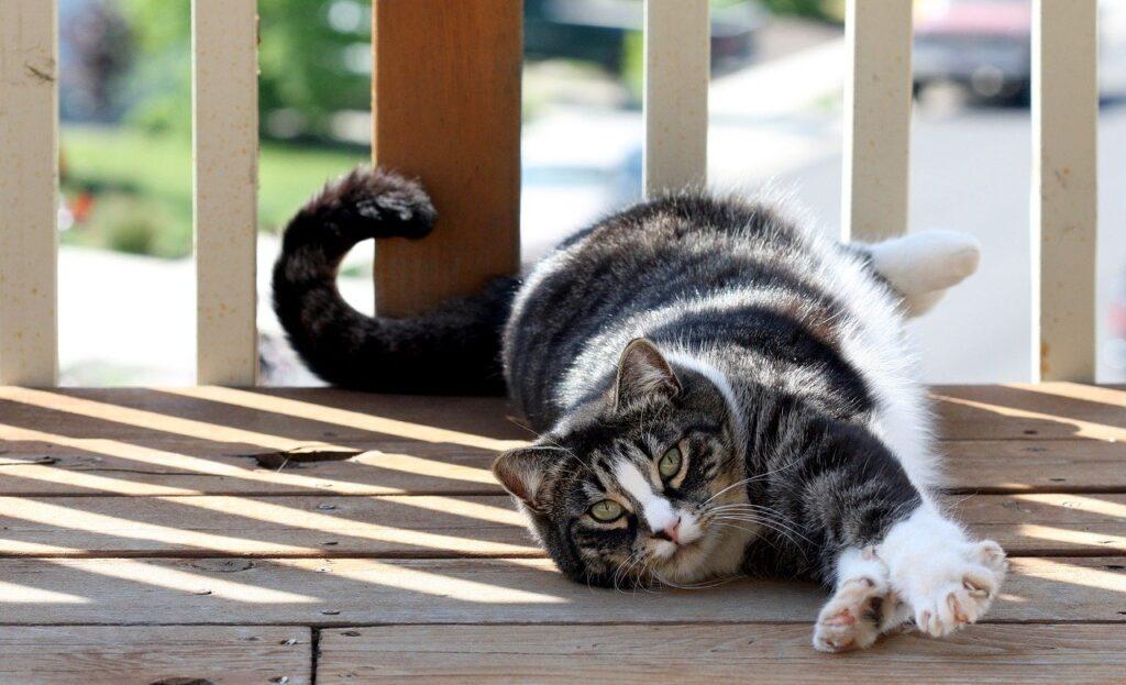 gatto nel portico di casa
