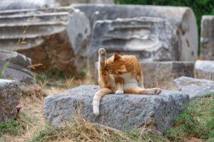gatto lecca zampa