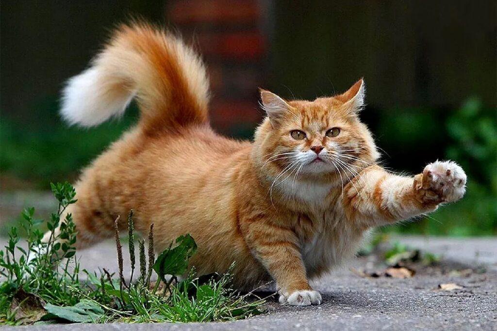 gatto che alza la zampa