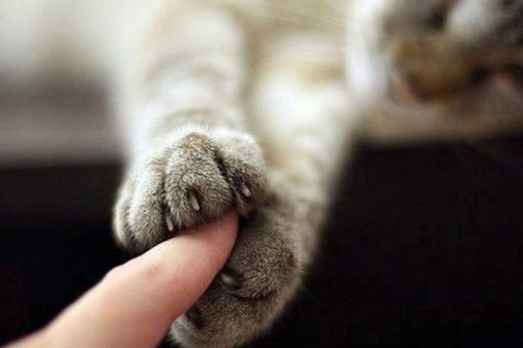 zampine del gatto