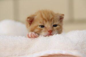 Gattino rosso appena nato