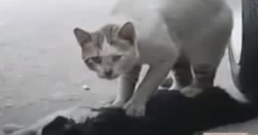 gatto salva l'amico
