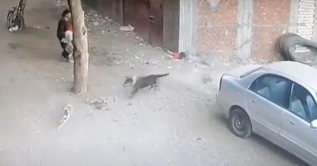 gatto salva un bambino da un cane aggressivo