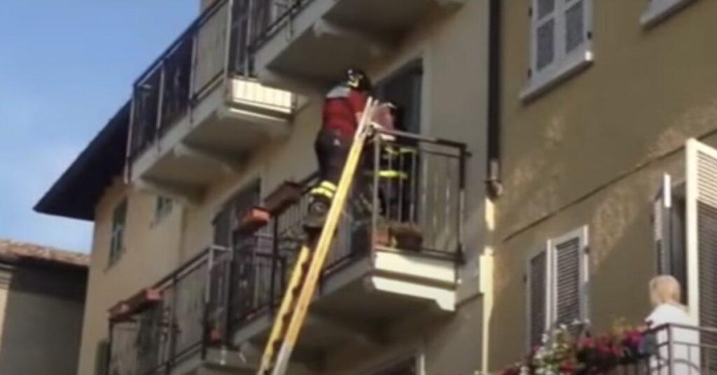 pompieri salvano un gatto