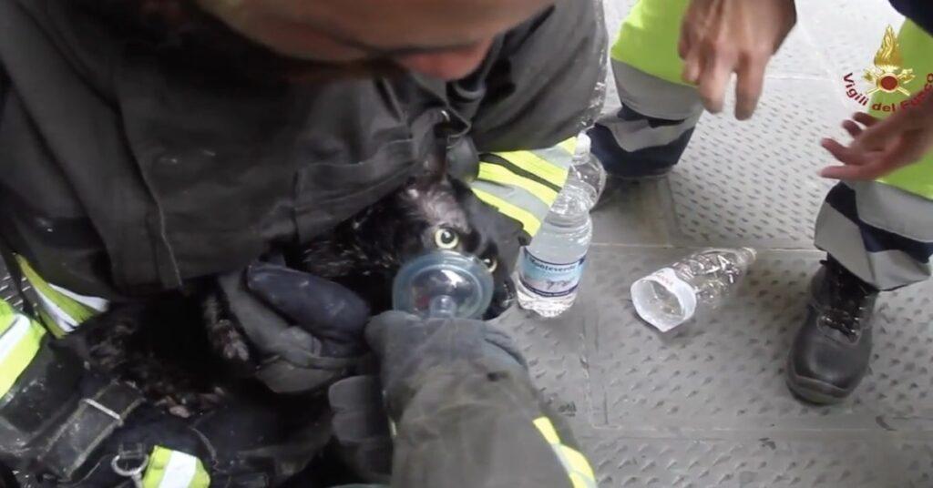 un pompiere rianima un gattino salvato dalle fiamme