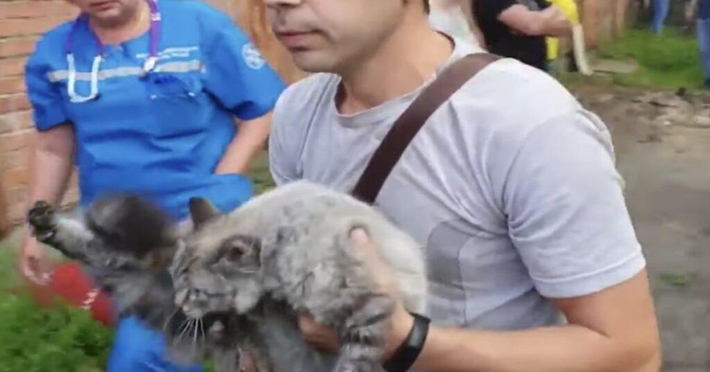 micio salvato in braccio al padrone