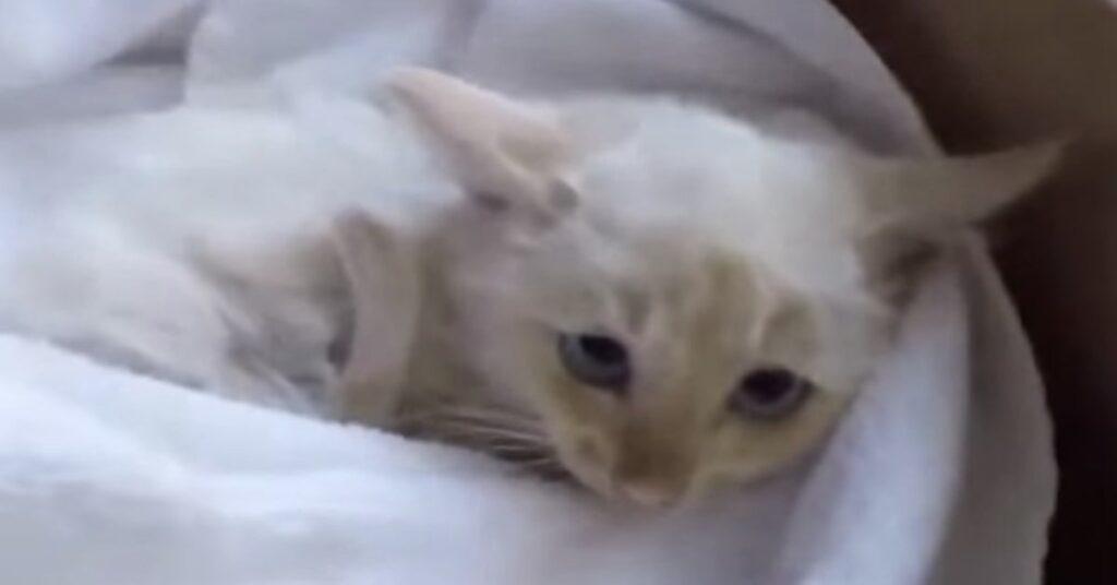 Lazarus gattino salvato dal freddo