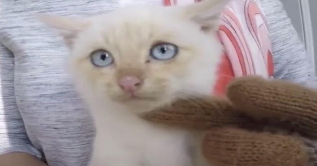 gattino Lazarus salvato da una famiglia