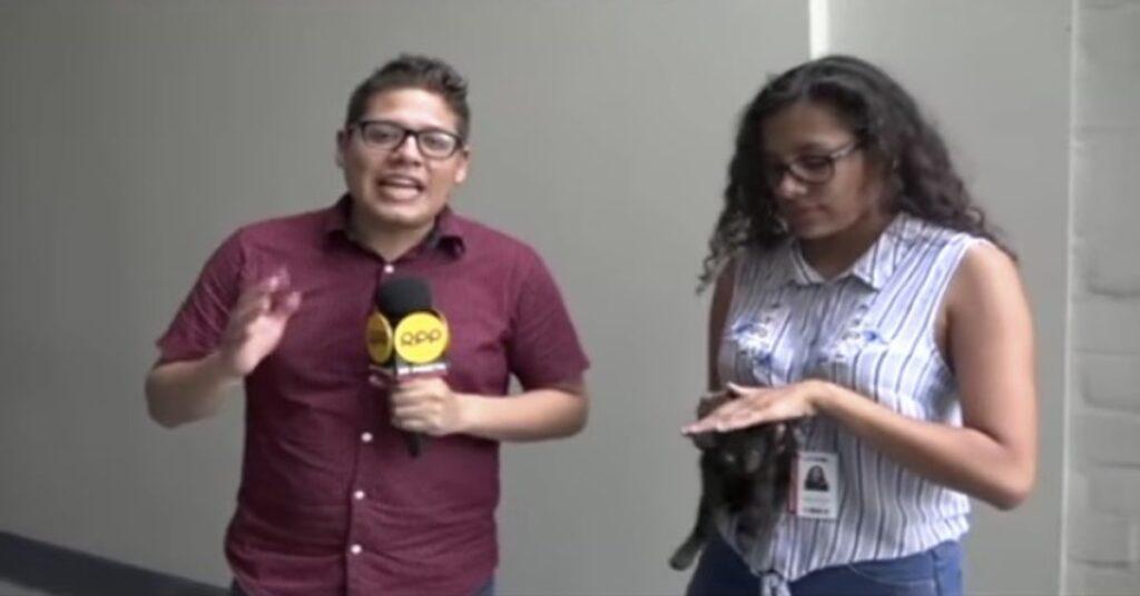 giornalisti con gatto salvato
