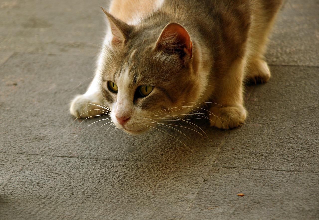 gatto in ansia