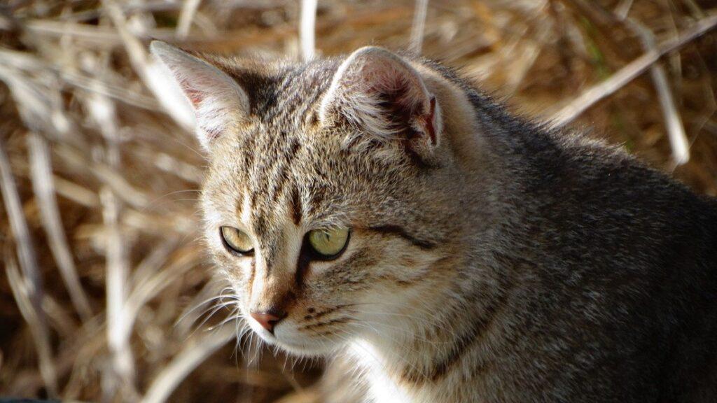 gatto occhi osserva