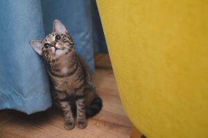 gatto nascosto tra le tende