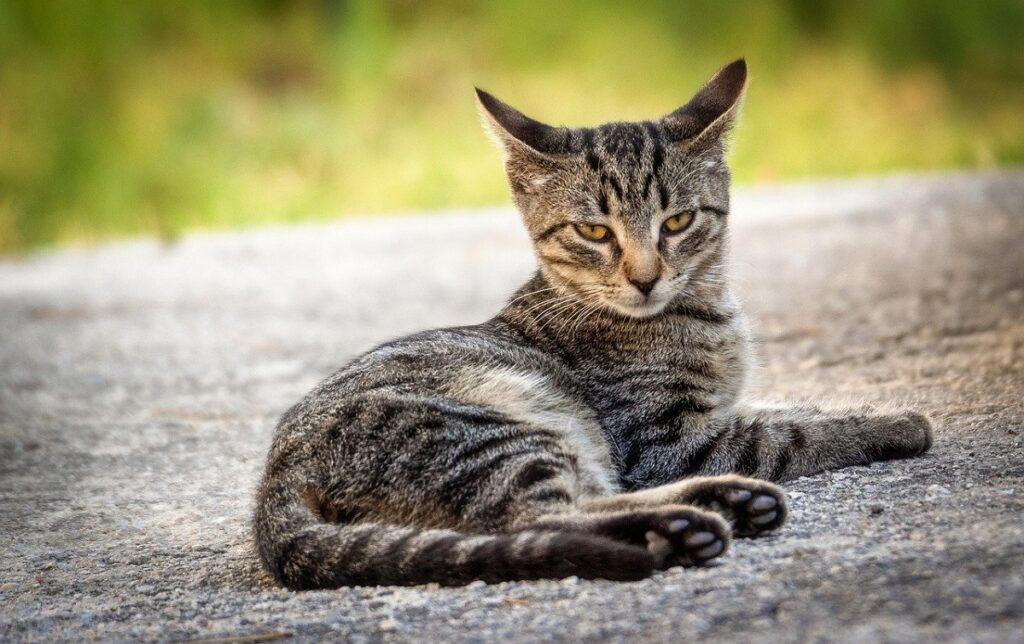 gatto asfalto seduto