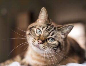 gattino con occhi chiari