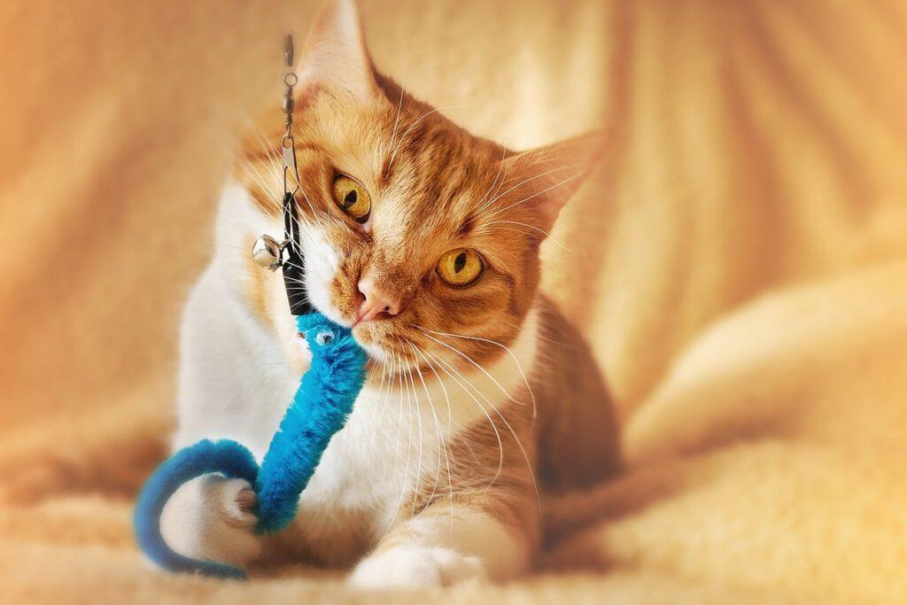 pupazzo per gatti