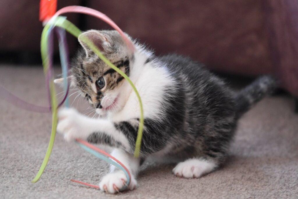 giochi per gattini