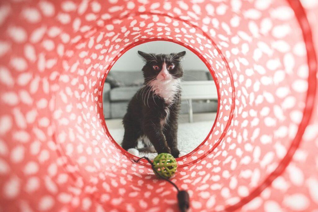 tunnel per gatto