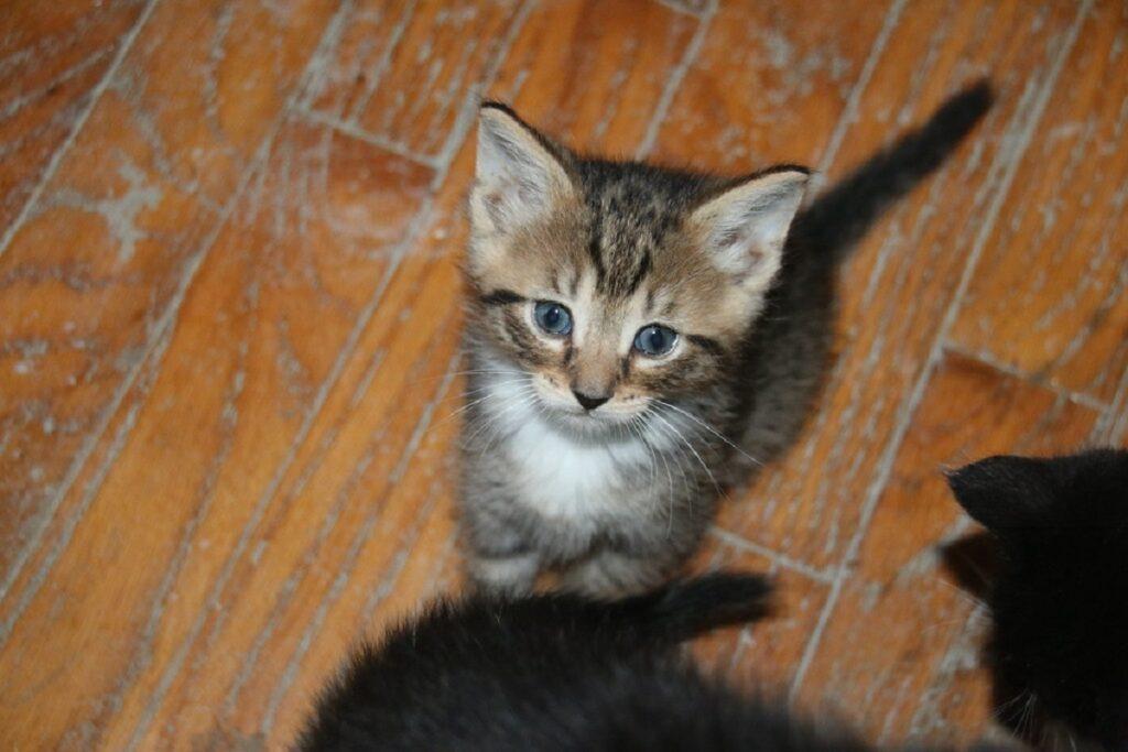 gattino dolce occhi