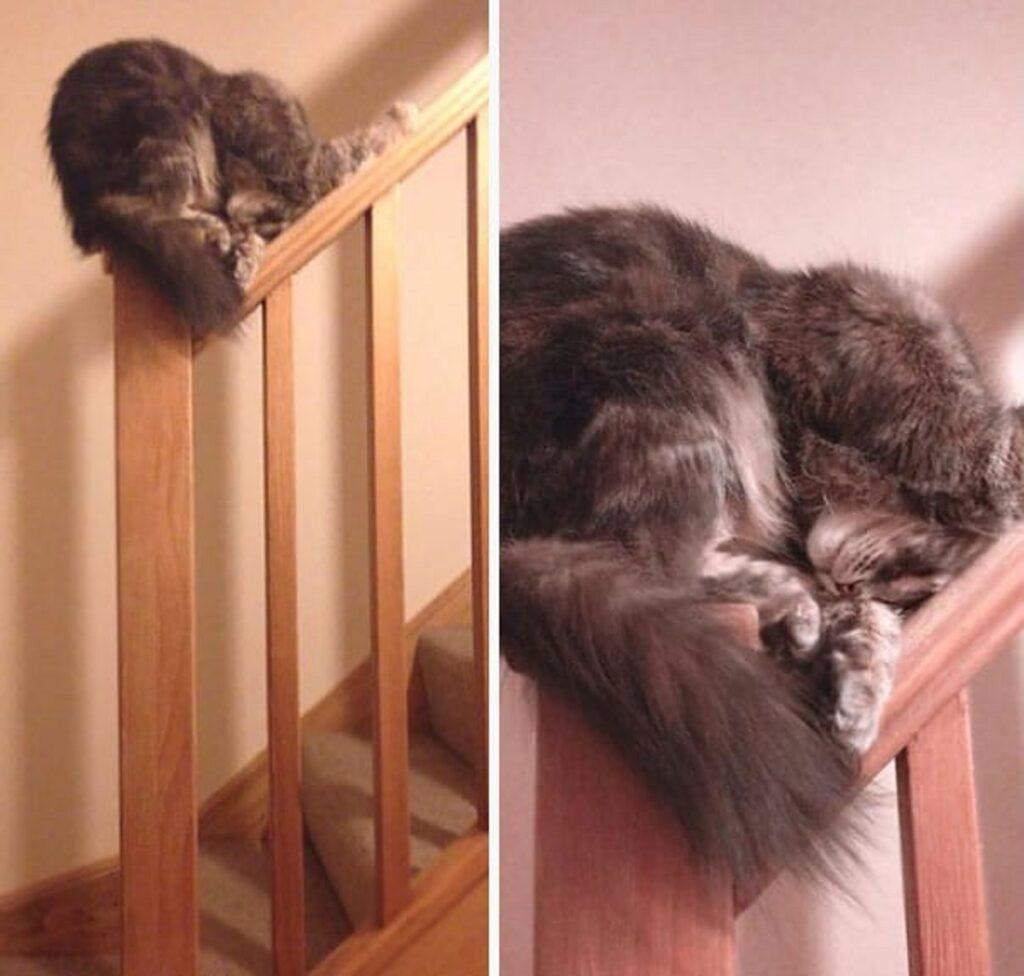 gatto ringhiera dorme