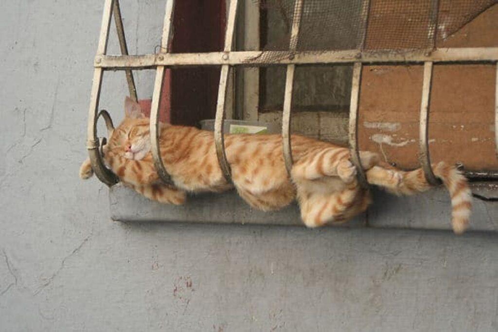 gatto gabbia finestra