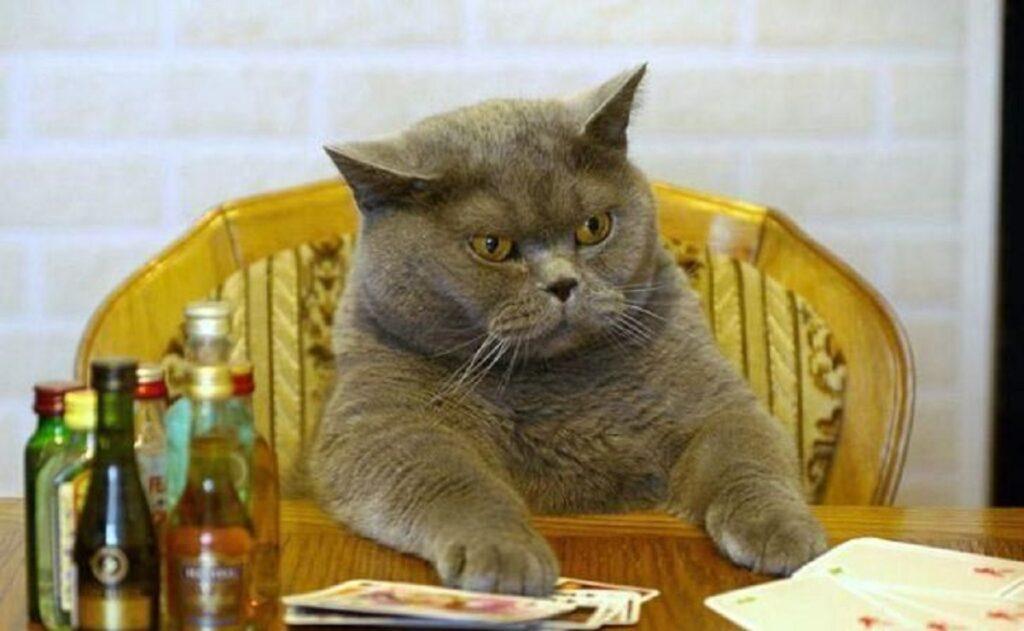 gatto poker carte