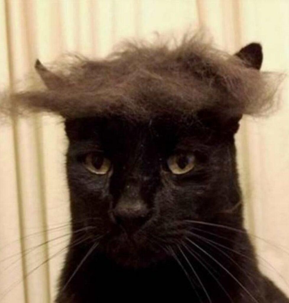 felino buffi capelli