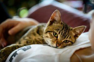 micio gatto tigrato