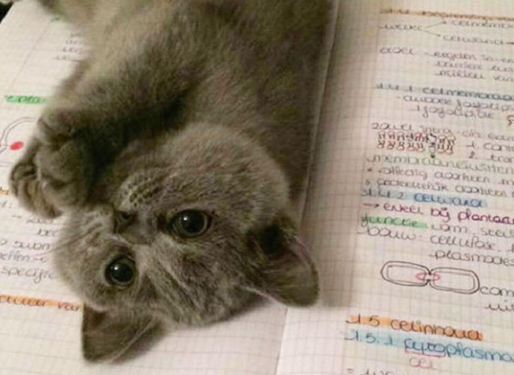 gatto grigio sopra quaderno