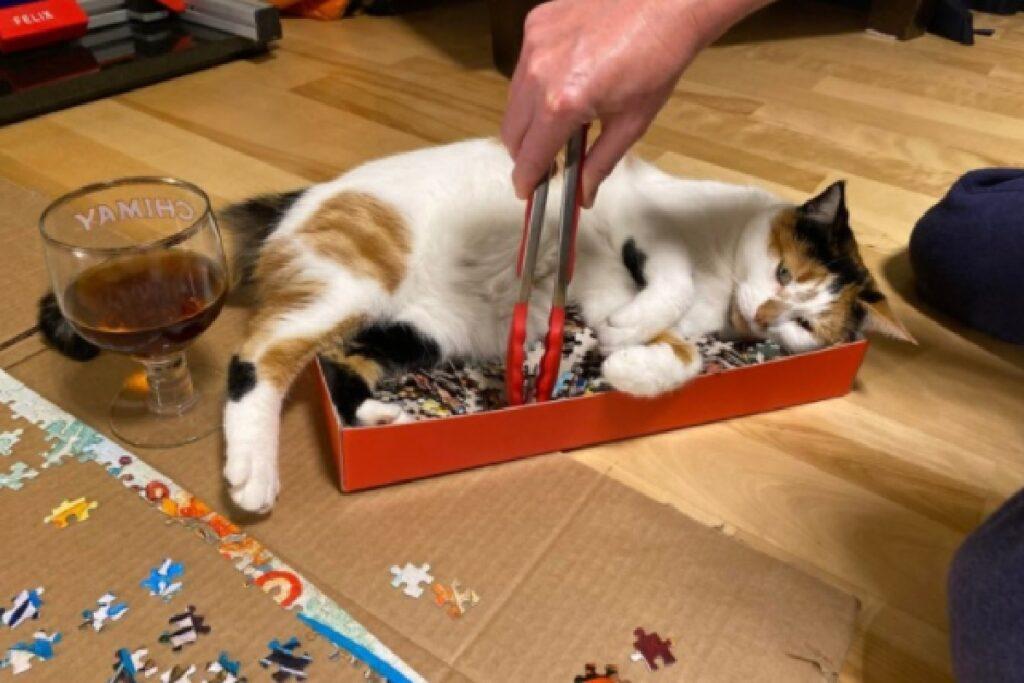 micio non vuole che proprietario faccia puzzle
