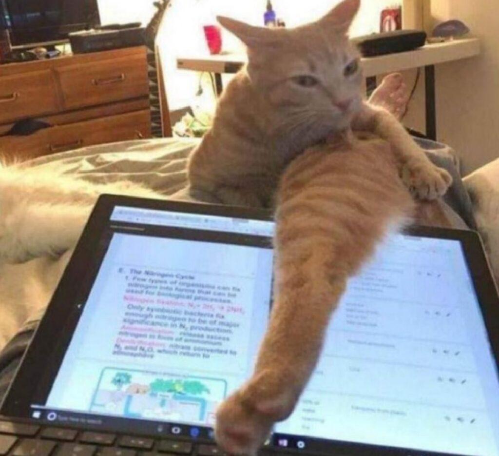 gatto ingegno zampa sopra schermo
