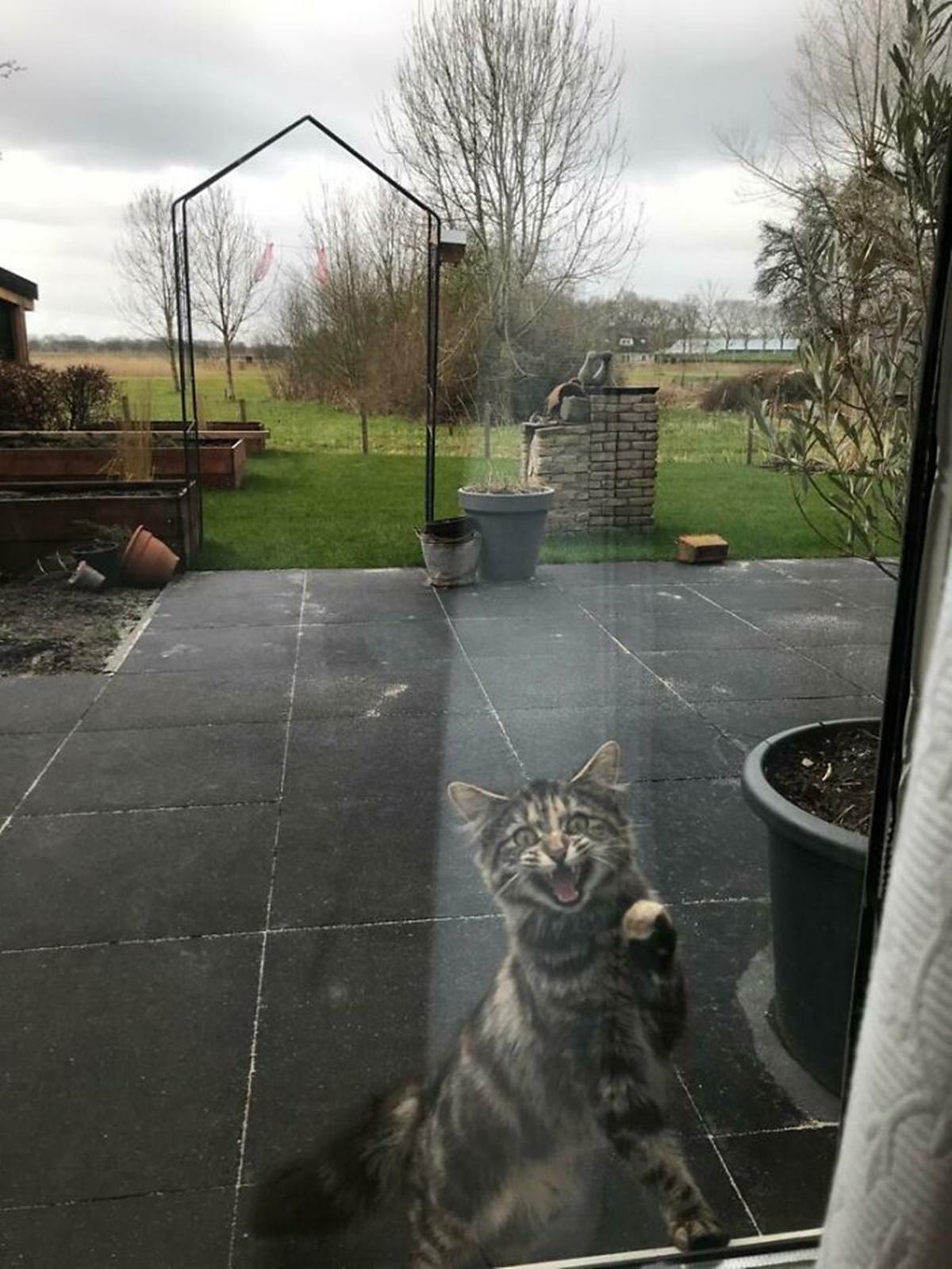 gatto fuori dalla porta
