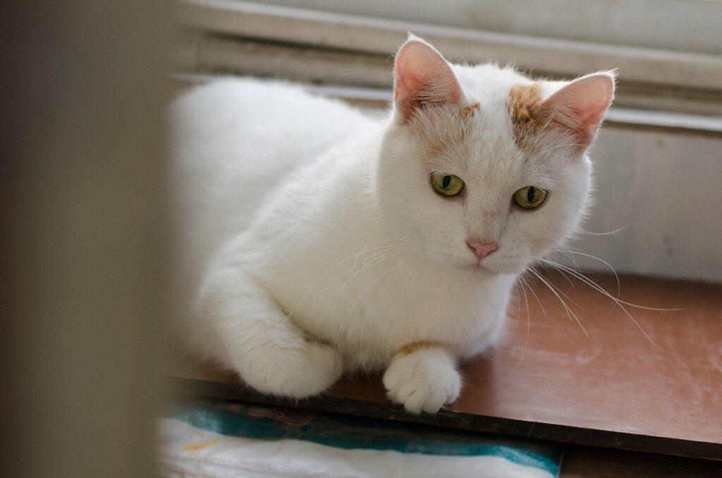 gatto davanzale finestra