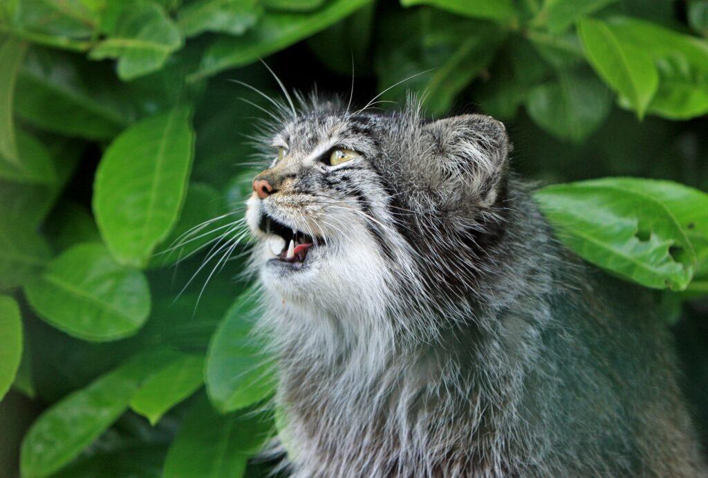 gatto grigio di profilo su sfondo verde