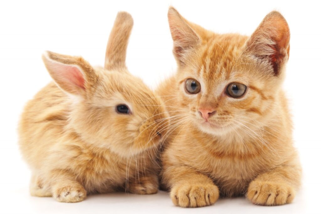 gatto e coniglio rossi