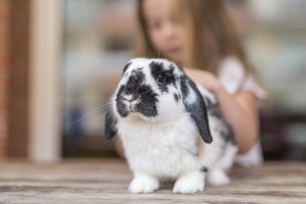 coniglio e bimba