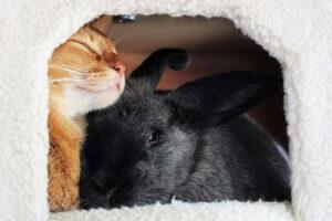 gatto e coniglio insieme