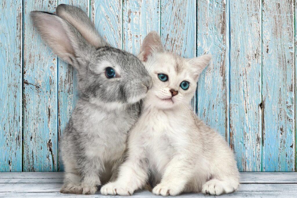 gatto e coniglietto