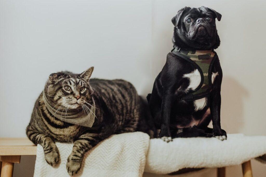 cane e gatto buffi